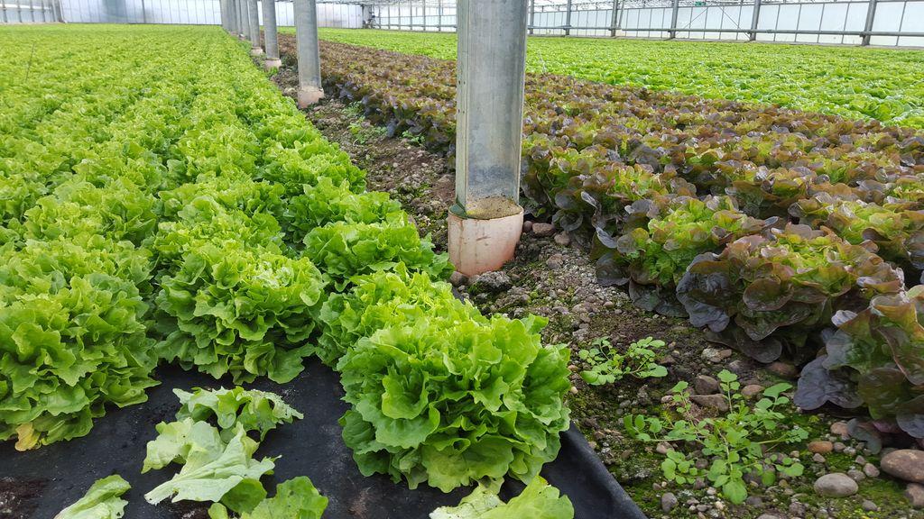 Der erste Salat des Jahres