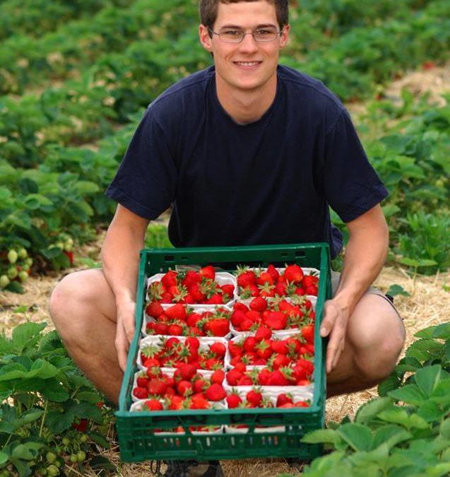 Erdbeeren vom Fuchshof