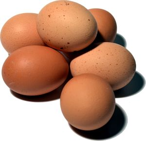 Unsere Eier sind Fipronil-frei